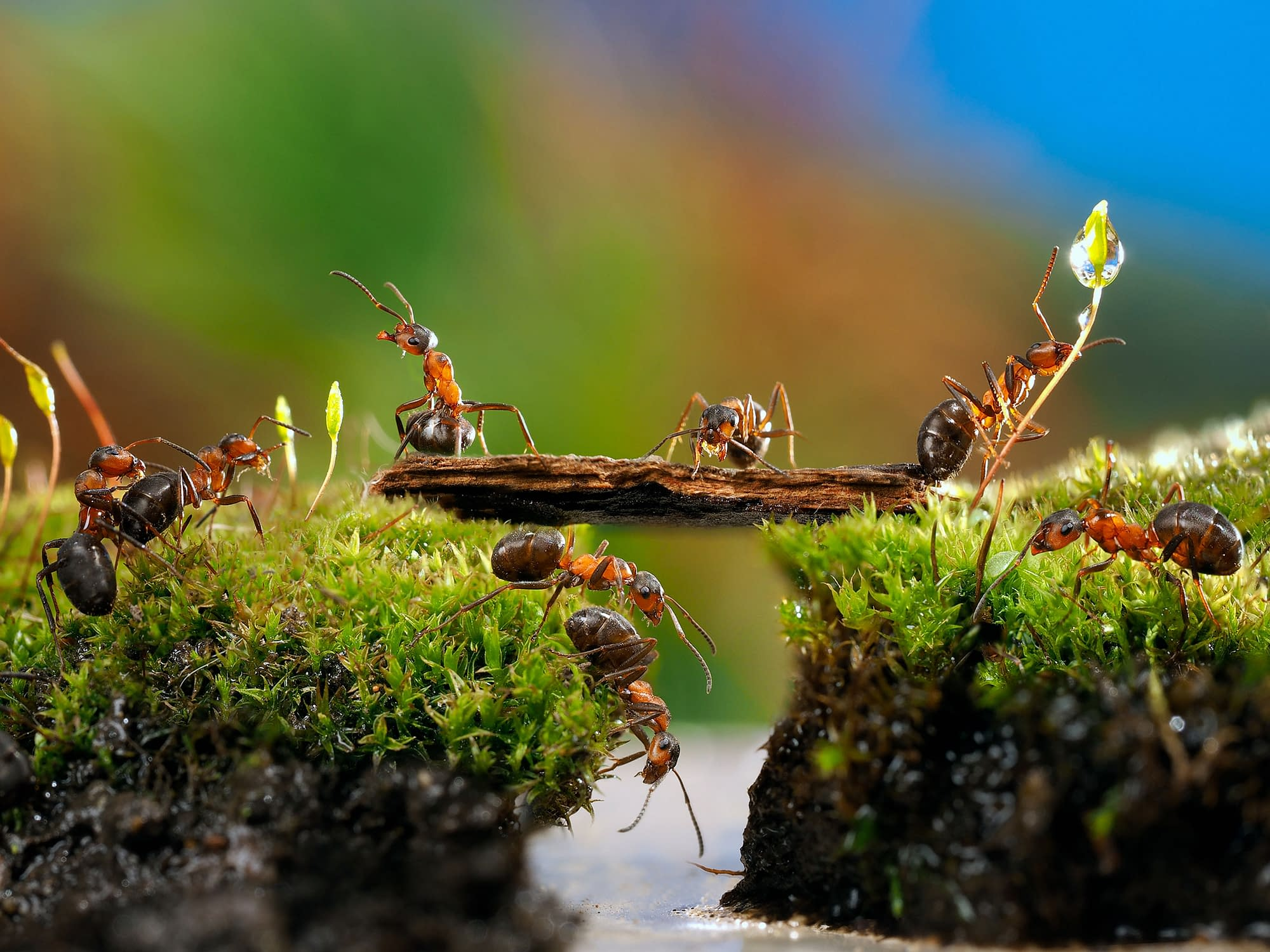 Ants. You might reconsider poisoning them. They can be your friend.